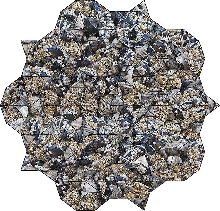 Infinite Star - Mussel and Barnacle colonies